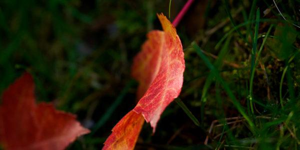 Spot Metering on the leaf