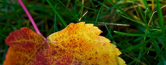 Fraser Valley Fall Colour Photography workshop