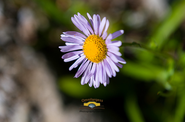 Directional light is very useful for Macro photography