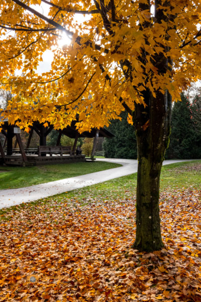 Fall Outdoor Photography Workshop is all about setting the exposure right and capture fabulous photos.
