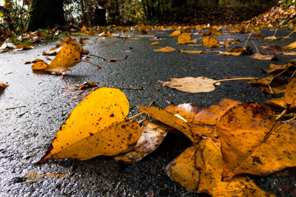 Fall outdoor photography workshop