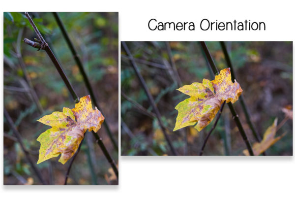 fall outdoor photography