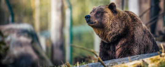 Wildlife Photography Routine