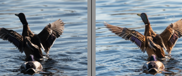 Before and After image. See how Lightroom brought out the details from shadows.