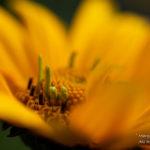 Closeup Photography