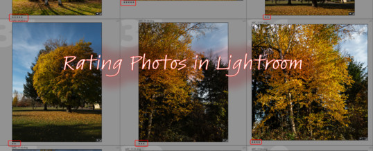 Rating Photos in Lightroom