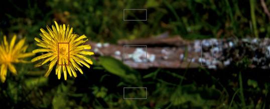 Quick Camera Tip: OFF-CENTRE COMPOSITION
