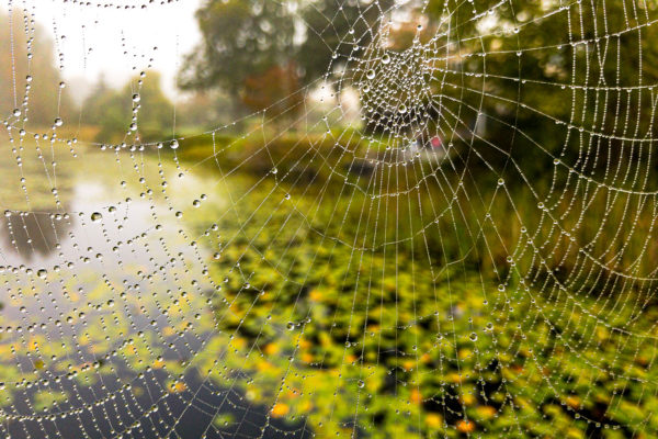 Spider Web Photography Tip