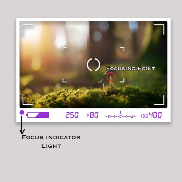 Focus Confirmation Light